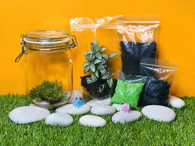 Terrarium DIY Kit premium